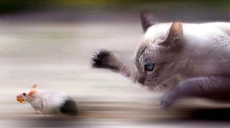 El Eterno Juego Del Gato Y El Ratón De Los Ataques Dirigidos Canales Ti